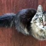 Corduroy, el gato más viejo del mundo. Créditos:el espectador.com