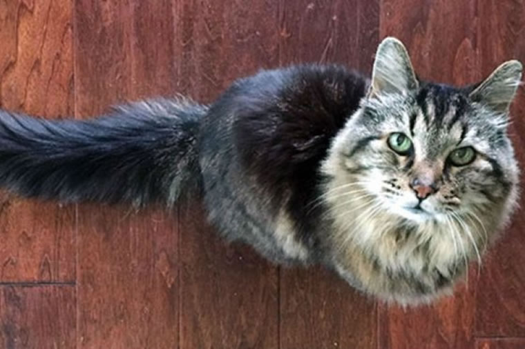 El gato más longevo del mundo