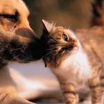 En algunos países se come carne de perro o gato