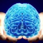 """""""No solo se ve como el cerebro en desarrollo, sus diversos tipos de células expresan casi todos los genes como un cerebro"""", indicó el líder de la investigación."""