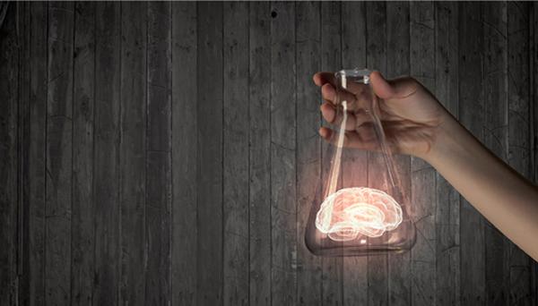 El cerebro-organoide, diseñado a partir de células de piel humana adulta, es el modelo del cerebro humano más completo desarrollado hasta ahora.