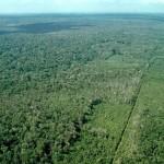 WWF afirma que al día de hoy el Planeta ya agotó los recursos de todo 2015 . EFE