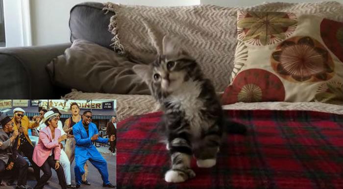 Gato baila al estilo de Bruno Mars