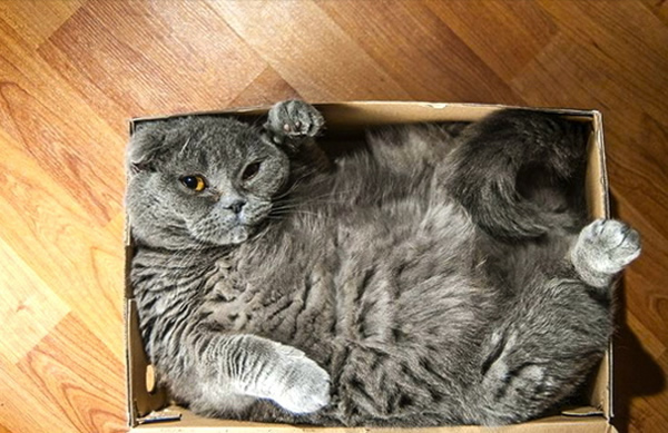 Gato en caja.Créditos:Reddit Ms_Chevious_Cat