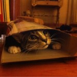 Ocultarse en cajas no solo obedece a un comportamiento natural; también los hace sentirse seguros.Foto: Reddit: Dr_Zoidberd_the_3rd