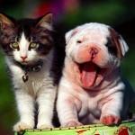 Imagen:animalmascota.com