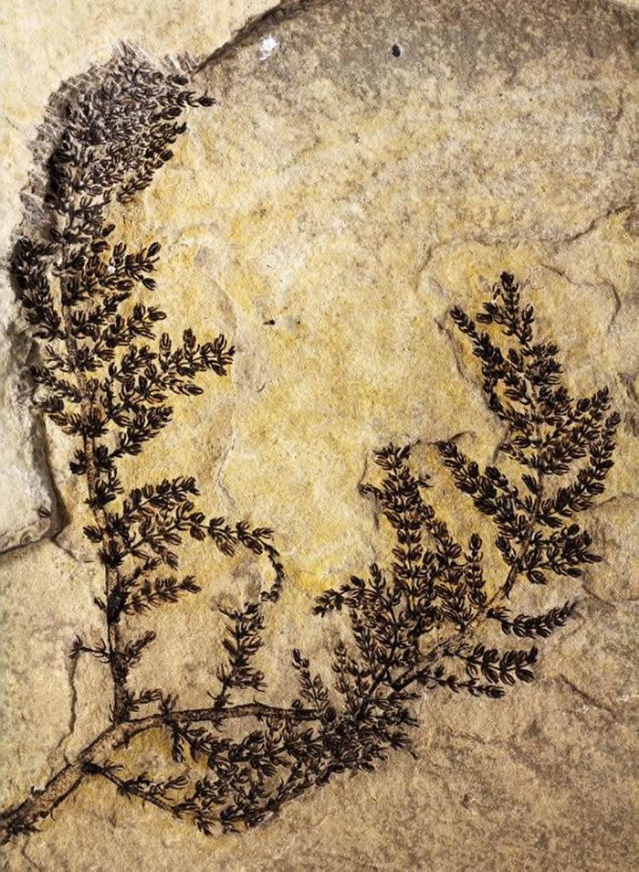Identifican la primera flor sobre la Tierra