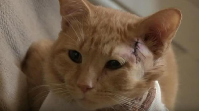 Gato salvó a niño de recibir una bala perdida