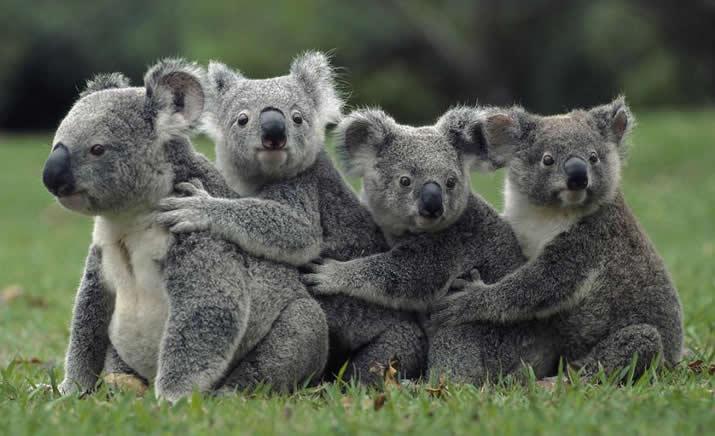 7 mitos sobre animales que… son verdad!