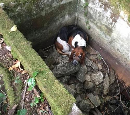Phoebe. Créditos: Protectores de mascotas de Islas Vashon