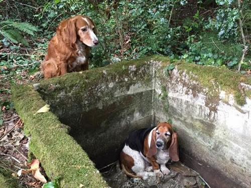 Tillie y Phoebe. Créditos: Protectores de mascotas de Islas Vashon