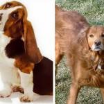 Phoebe y Tillie. Créditos: Protectores de mascotas de Islas Vashon