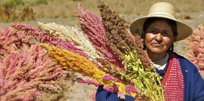La quinua, una semilla sagrada.