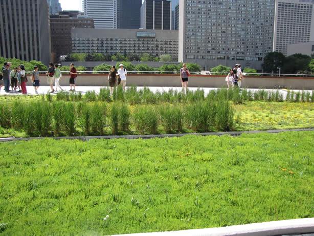 Techo verde en Toronto City Hall. Créditos:aasid.parsons.edu