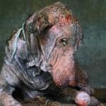Exhausto y temeroso de los humanos este perro experimentó un gran cambio en solo 2 meses