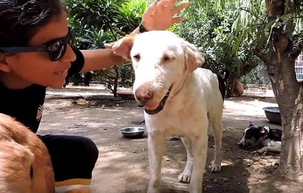 Perro rescatado en India