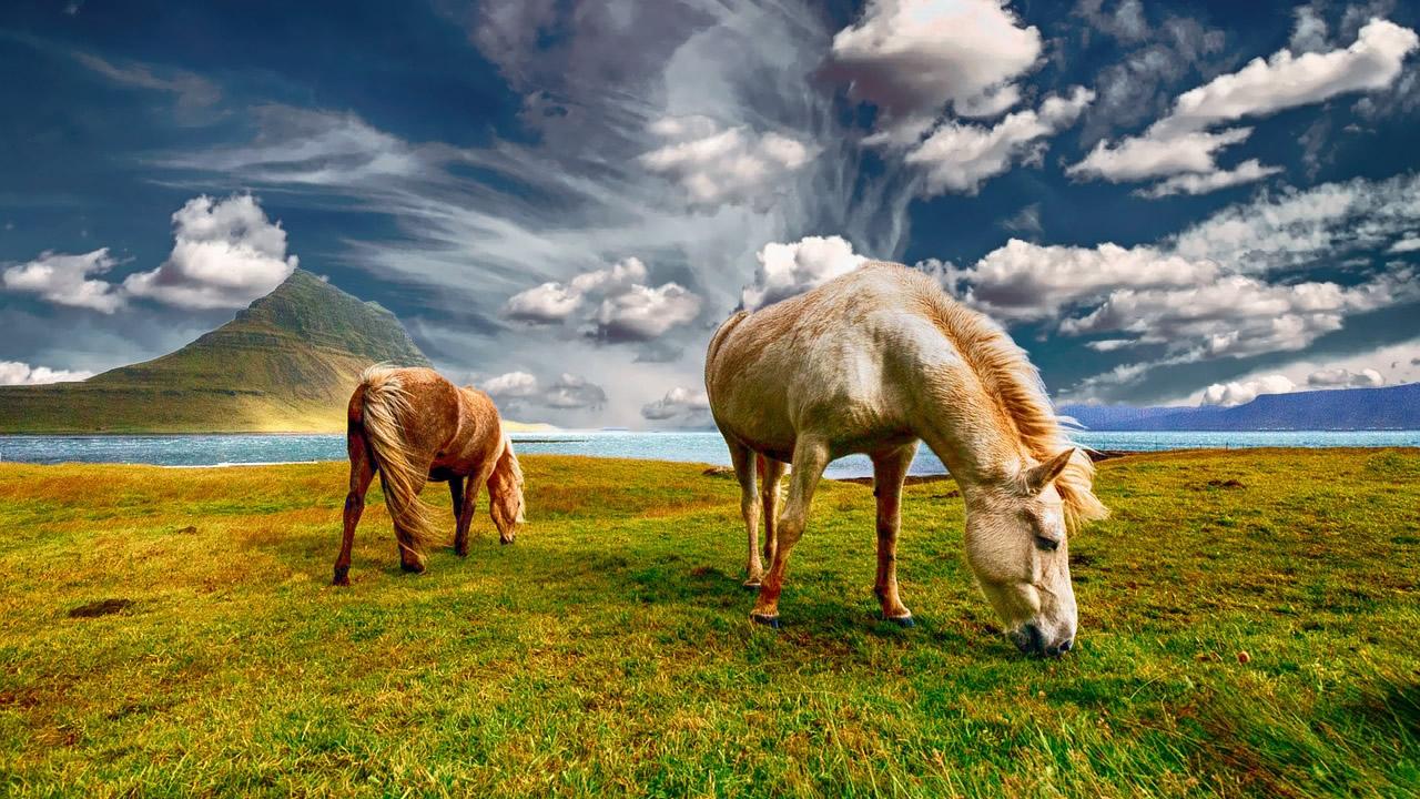 Los caballos pueden identificar y recordar las emociones de las personas