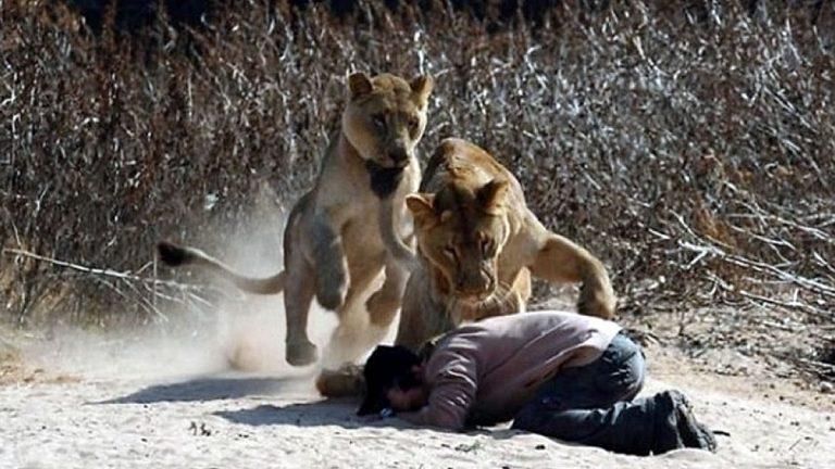 Pastor de Iglesia es mutilado por leones al intentar probar que Dios lo salvaría