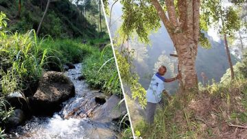 Anciano siembra más de 11.000 árboles y devuelve el agua a un bosque